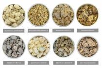 DIE 8 WEIHRAUCHBÄUME - verschiedene Stammpflanzen - SET