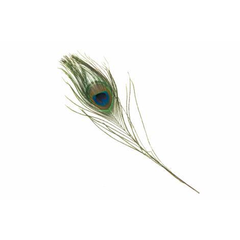 Räucherfeder Pfauenfeder 20 - 25 cm