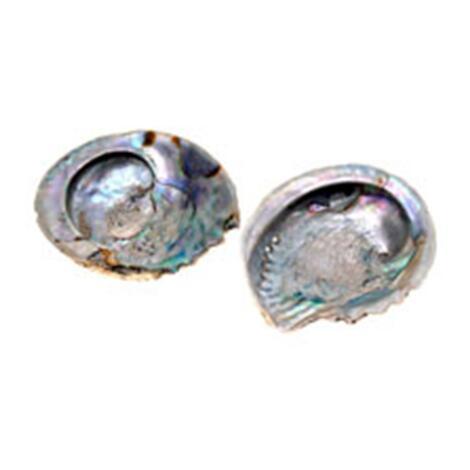 Abalone Muschel mit Defekten - II. Wahl -  M-XL